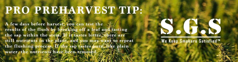 Harvest | Grow Guide | Scandinavian Grow Show